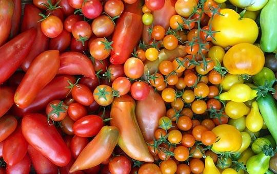 سفارش میوه و سبزیجات